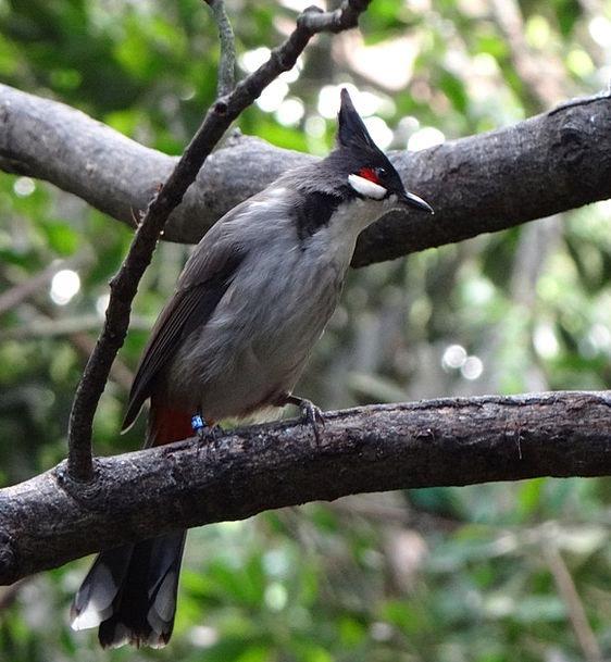 Bird Fowl Plants Bushes Scrubs Trees Synanthropic