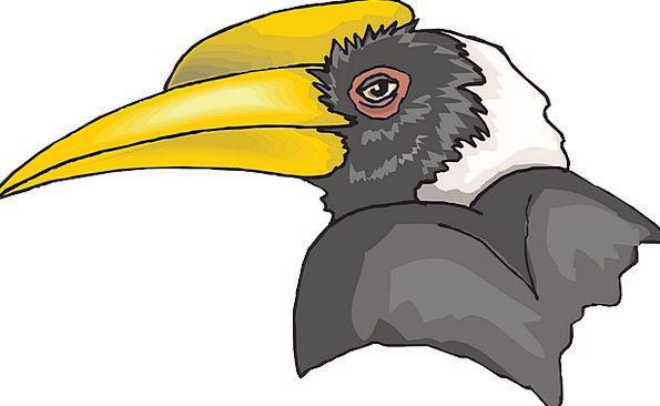 Head Skull Fowl Hornbill Bird Beak Bill Feathers B