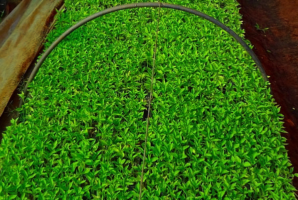Seedlings Sprouts Nursery Plant sales outlet Chill