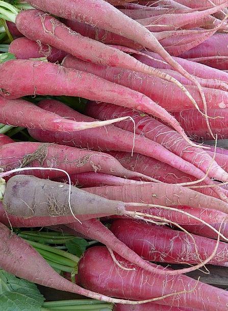 Red Radish Drink Food Vegetables Potatoes Radish F