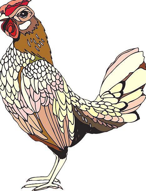 Rooster Fowl Raise Cockerel Cock Free Vector Graph
