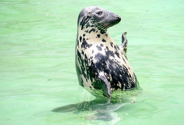 Baltic Ringed Seal Pattern Kaliningrad Print Zoo M
