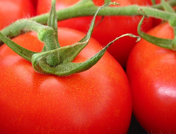 Tomato Landscapes Plot Nature Nature Countryside G