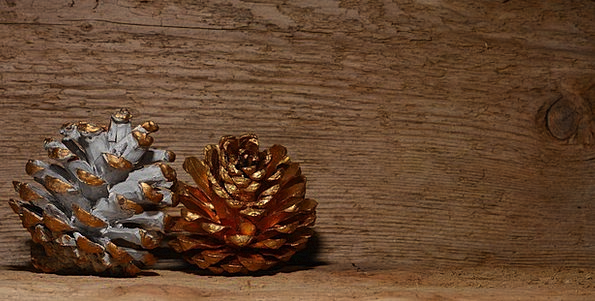 Pine Cones Textures Gilded Backgrounds White Snowy