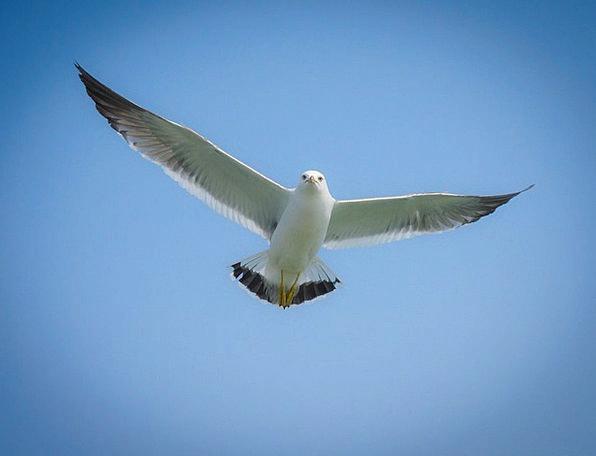 Seagull Physical New Novel Animal I myself