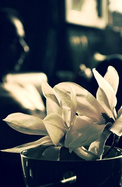 Flower Floret Landscapes Snowy Nature Nature Count