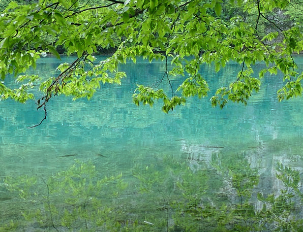 Plitvice Lakes Landscapes Nature Water Aquatic Cro