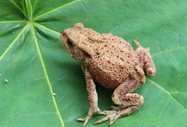 Toad, Periodical, Warts, Lumps, Journal, Green, Lime | PixCove