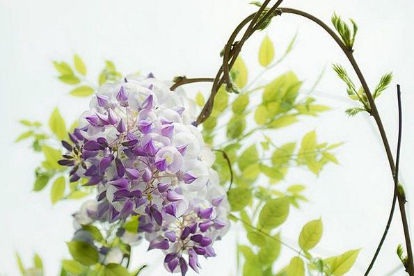 Wisteria Textures Floret Backgrounds Beautiful Lov