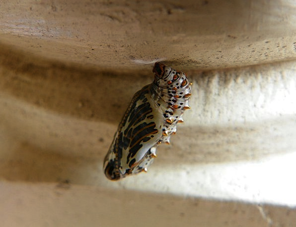 Metamorphosis Transformation Sheath Butterfly Coco