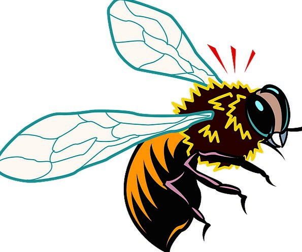 Bee Bug Wings Annexes Insect Free Vector Graphics