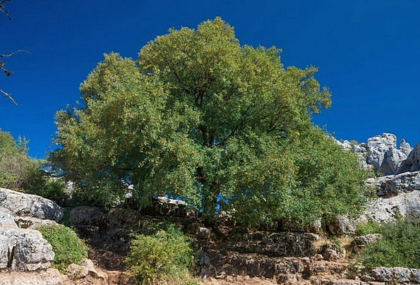 Andalusia Landscapes Nature Trees Plants Spain Cou