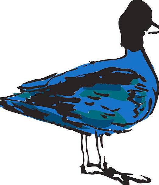 Blue Azure Fowl Duck Stoop Bird Wings Annexes Feat