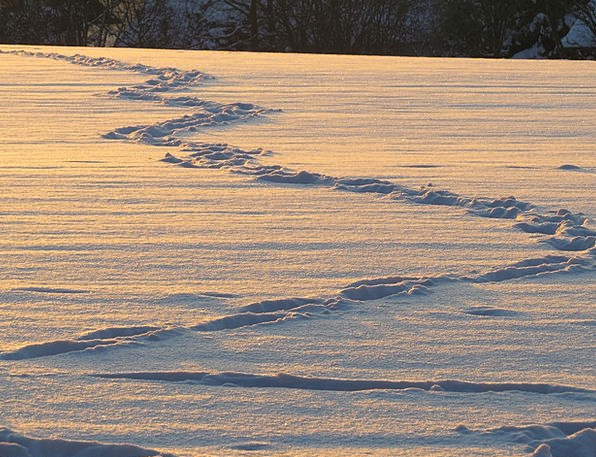 Traces Suggestions Snowflake Snow Lane Snow Trudge