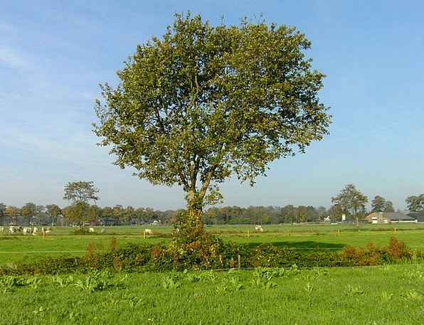 Tree Sapling Landscapes Meadow Nature Nature Count