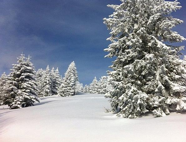 Winter Season Landscapes Snowflake Nature Fir Snow