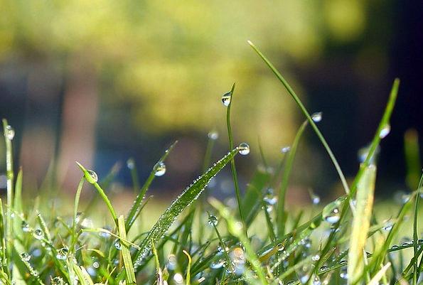 Water Aquatic Landscapes Lawn Nature Plant Vegetab