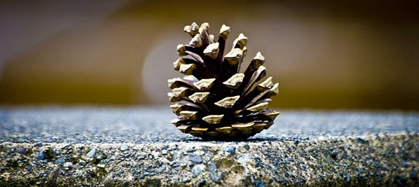 Pinecone Landscapes Lime Nature Cone Green Silhoue