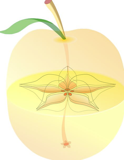 Apple Medical Structure Health Inside Confidential