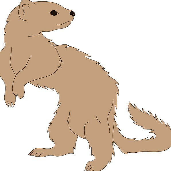 Ferret Search Physical Mammal Creature Animal Must