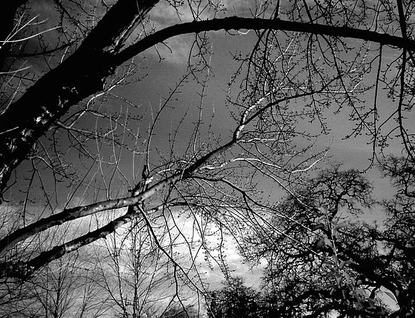 Branches Twigs Landscapes Sapling Nature Nature Co