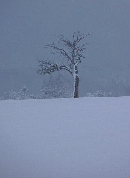 Winter Season Sapling Wintry Chilly Tree
