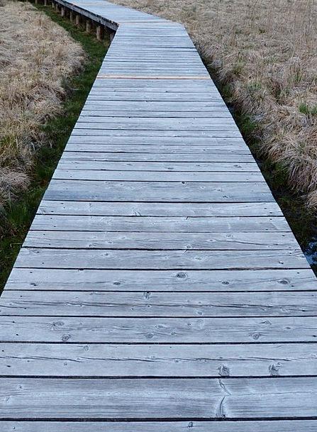 Web Mesh Walkway Moor Heath Boardwalk Swamp Marsh