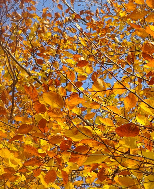 Leaves Greeneries Landscapes Sapling Nature Sky Bl