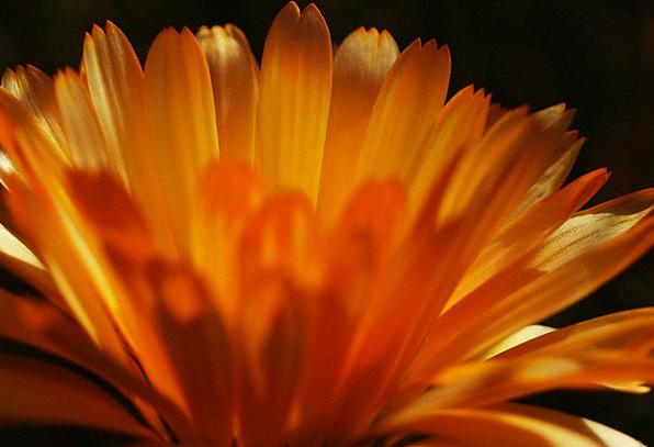 Flower Floret Bright Macro Instruction Light Ornam
