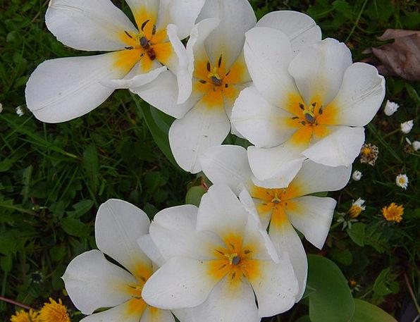 Flowers Plants Landscapes Snowy Nature Beautiful L