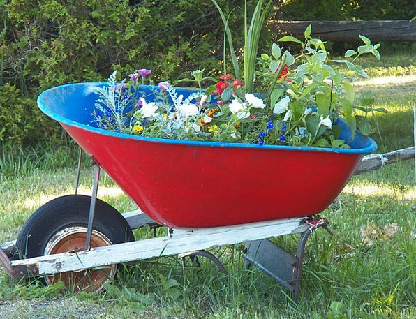 Wheelbarrow Barrow Floret Flowers Plants Flower Ga