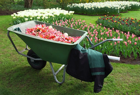 Barrow Wheelbarrow Landscapes Wagon Nature Equipme