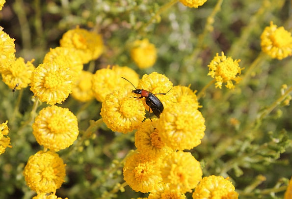 Insect Bug Plants Yellow Creamy Flowers Nature Cou