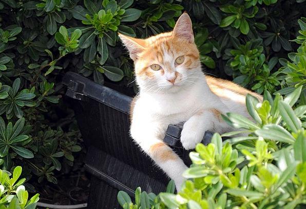 Cat Feline Creamy Park Common Yellow Comfortable F
