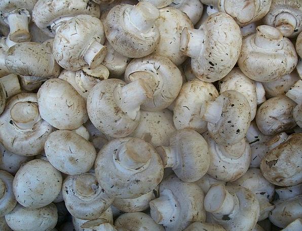 Mushroom Burgeon Drink Burgeons Food Food Nourishm