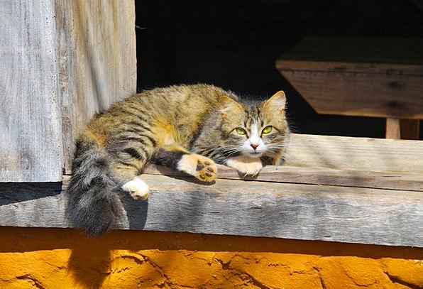 Animals Faunae Feline Observation Remark Cat