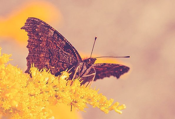 Butterfly Bug Nature Countryside Insect Animal Phy