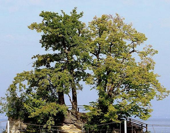 Island Isle Plants Idyllic Peaceful Trees See Unde