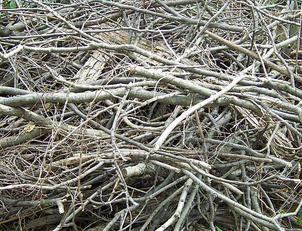 Dead Deceased Sapling Branches Twigs Tree Limbs Me