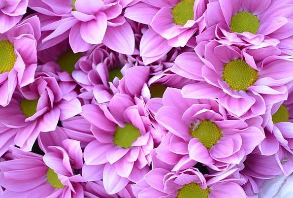 Purple Elaborate Landscapes Plants Nature Nature C