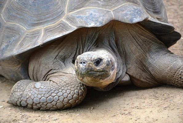 Turtle Physical Slowly Gradually Animal