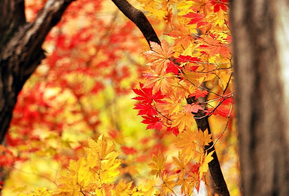 Autumn Fall Landscapes Scenery Nature Nature Count