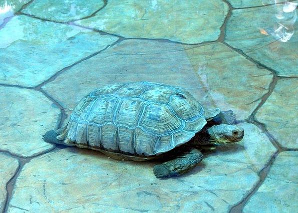Turtle Amphibian Sea Animals Faunae Tortoise Aquat