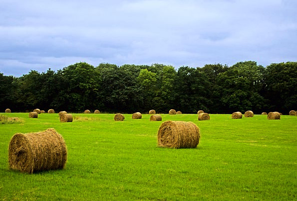 Agricultural Agrarian Textures Farming Backgrounds