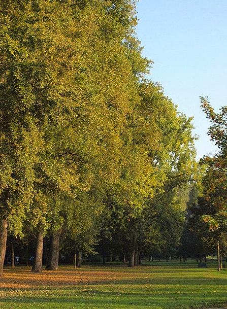 Main Lawn Trees Plants Main Aue Autumn Fall
