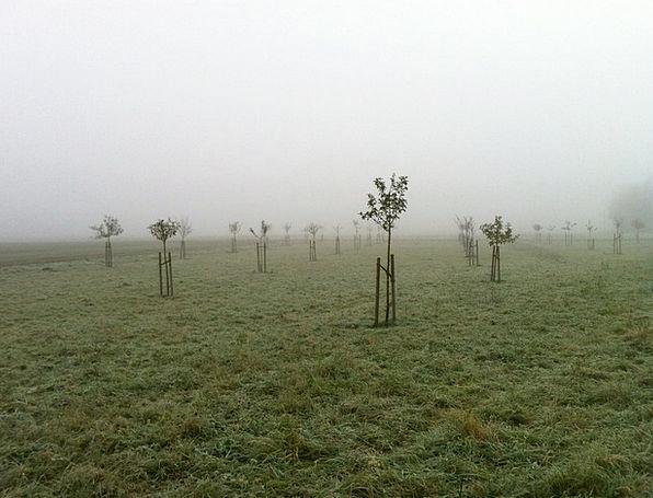 Orchard Plantation Landscapes Nature Fog Mist Nove