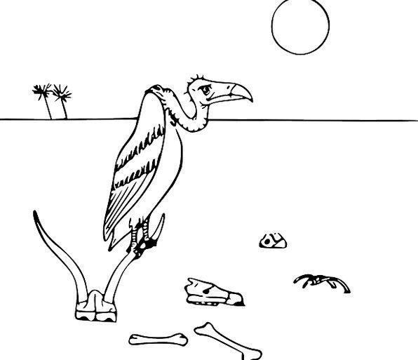 Vulture Predator Fowl Scavengers Foragers Bird Bon