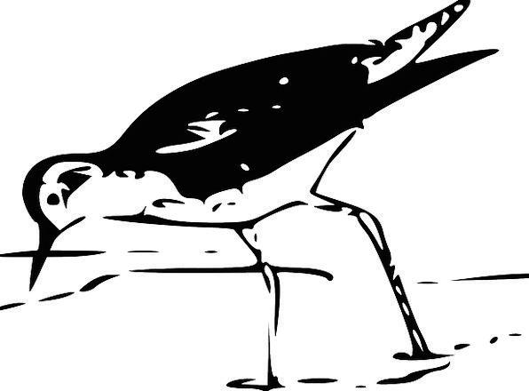 Bird Fowl Gumboot Waterbird Wader Fauna Wildlife W