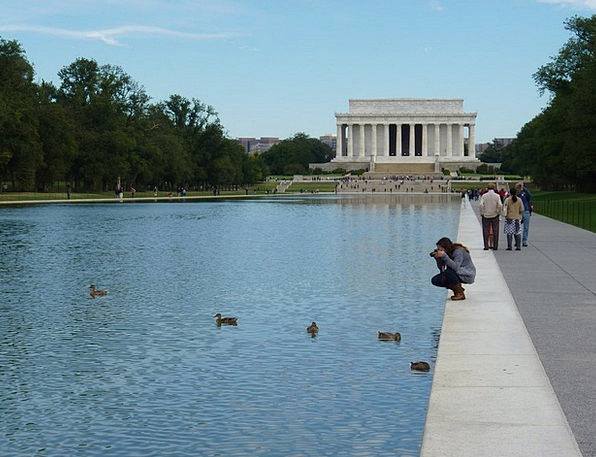 Lincoln Photo Ducks Dears Photograph Water Aquatic