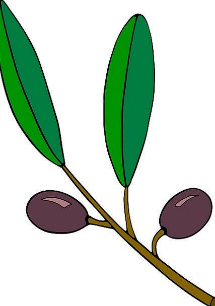 Green Leaves Landscapes Nature Fruits Ovaries Berr